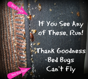 Bed Bugs on Upholstery