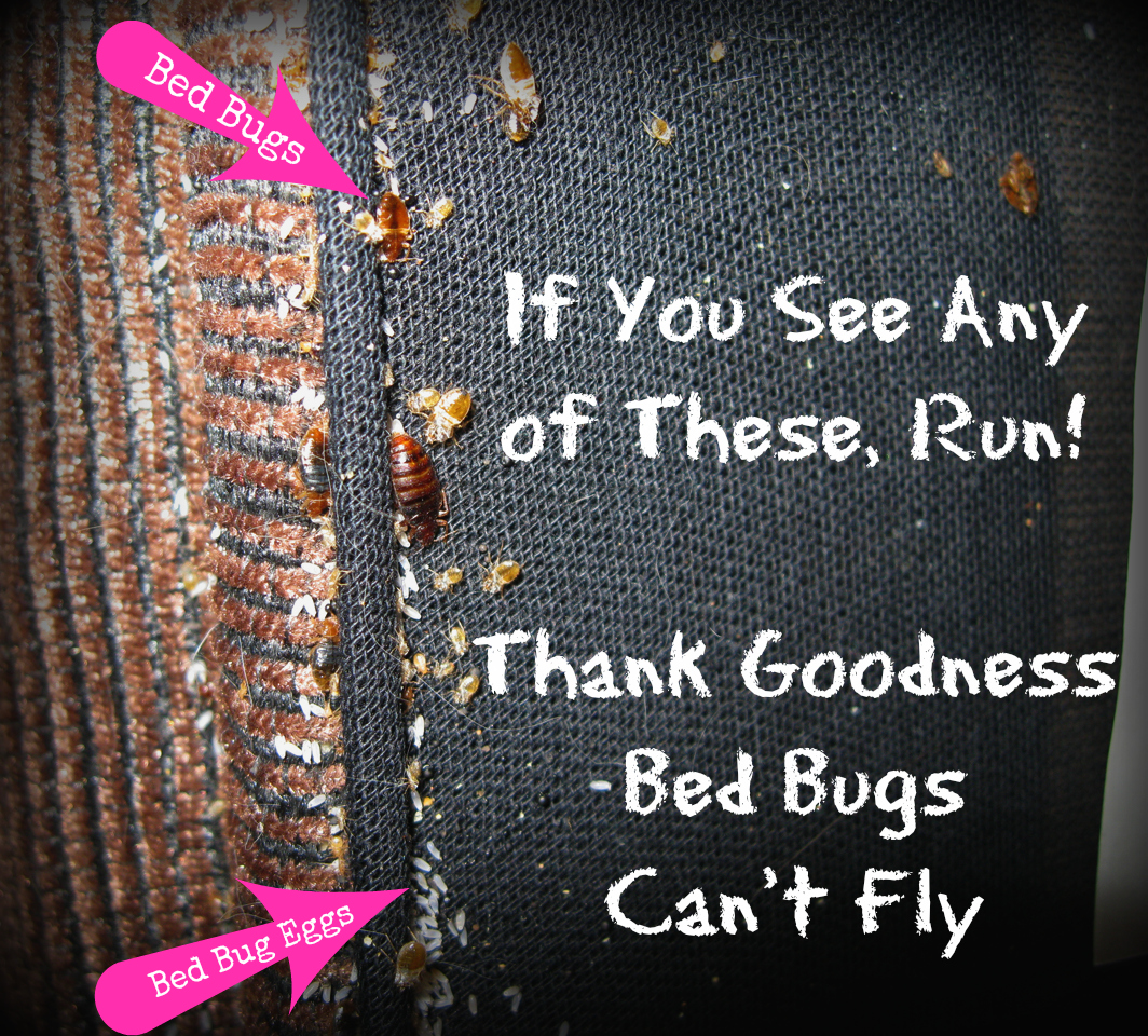 3 Easy Steps To Keep Bed Bugs Out Of Your Up Cycle Project