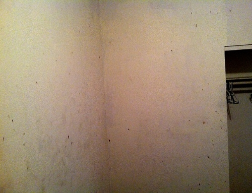 Bed Bug Blood Stains on Wall (c) Thrasher Termite & Pest Control, Inc.
