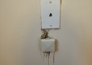 Bed Bug Fecal Spots Near Phone Jack, Photo (cc) Exit Zero Photography