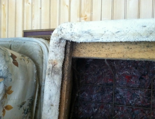 Bed Bug Fecal Spotting on Box Spring, Photo (c) Thrasher Termite & Pest Control, Inc.