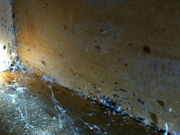 Bed Bug Spotting and Eggs Under Dresser, (c) Thrasher Termite & Pest Control, Inc.