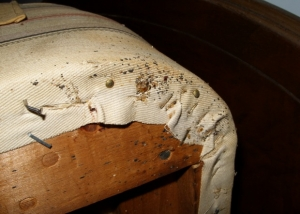 Old Box Spring with Bed Bug Fecal Spotting and Cast Skin, Photo (cc-nd) louento.pix