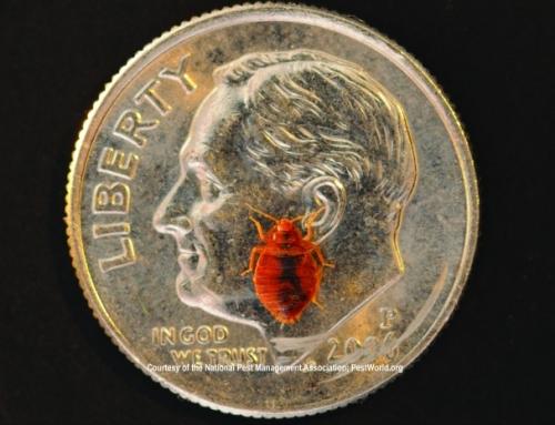Bed Bug on Dime, Photo (cc) Medill DC