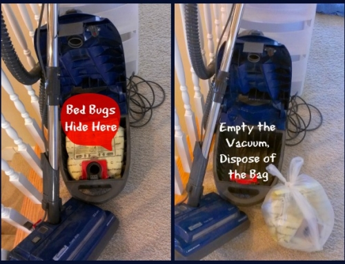 Vacuums Suck and Shelter Bed Bugs