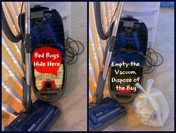 Bed Bugs in the Vacuum Thrasher Termite & Pest Control