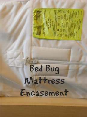 bed bug encasement
