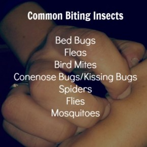 Common Biting Insects