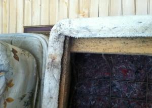 Bed Bug Pest Control San Jose Ca